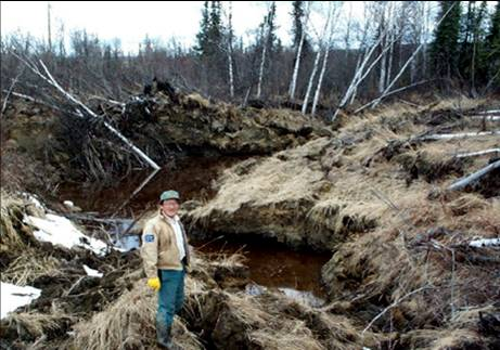 Importation de virus Melting_permafrost_forest_101206
