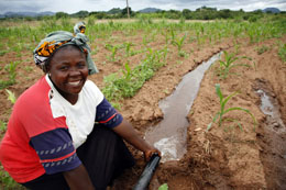 90% of agriculture in Africa is rainfed.: Finding out how its productivity could be improved will benefit some of the world's poorest farmers. Photo: David Brazier/IWMI