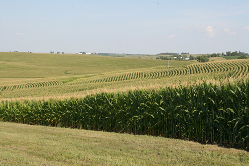 Corn fields in Iowa: Site of NSF's Intensively Managed Landscapes Critical Zone Observatory (CZO).: Photograph by Praveen Kumar courtesy of NSF.