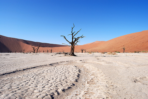 Sossusvlei, Dead Vlei, inside the Namib-Naukluft Park in Namibia: Desert, Namibia, 2007. Photograph courtesy of Håkan Tropp, SIWI