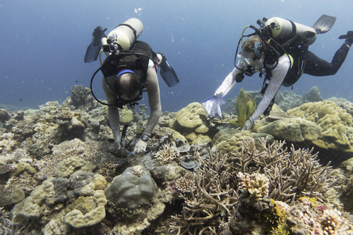 Dr. Dusty Kemp and PhD student Kira Turnham collect corals from their offshore study site.: Photograph by Gaelin Rosenwaks