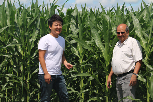 Scientists Dong Kook Woo (left) and Praveen Kumar study nutrients in corn productivity.: Photograph by Praveen Kumar courtesy of NSF.