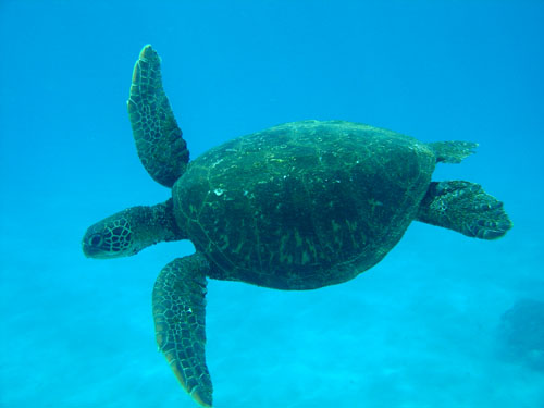 The marine reserve will help protect the 1,249 known plants and animals found in these waters,: including 365 species of fish, 22 species of whales and dolphins, and two species of turtles.   Photograph by Andrew Christian
