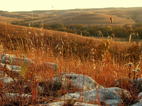 Drought or heat waves seemed to have less effect on grass growth as summer turned to fall.: Photograph courtesy of NSF Konza Prairie LTER Site