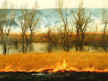 Fire is a natural part of a prairie ecosystem, including at NSF's Konza Prairie LTER site.: Photograph courtesy of NSF Konza Prairie LTER Site
