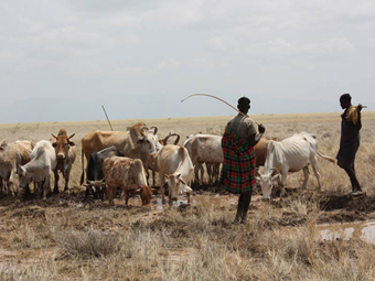 Local pastoralists lead their livestock to the water draining from the borehole.: Photograph © UNESCO/Nairobi Office