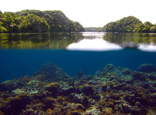 Palau's beautiful coral reefs are surprisingly resistant to the effects of ocean acidification.: Photograph courtesy of WHOI