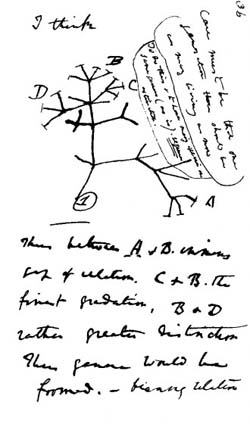 Charles Darwin (1809–1882) was the first to produce an evolutionary tree of life.: Page from Darwin's notebooks around July 1837 showing his first sketch of an evolutionary tree. Photograph and text courtesy of  Wikimedia Commons