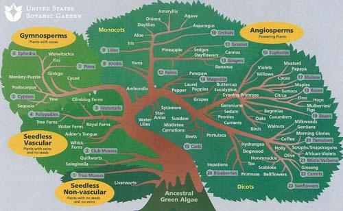 A botanical tree of life, from amaryllis to tree fern.: Photograph courtesy of  U.S. Botanic Garden