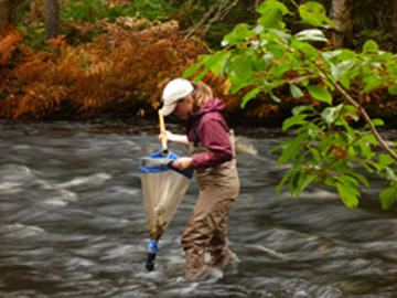Lindsey Freeman conducting benthic invertebrate sampling. Part of the CARP Sub-watershed planning project: Photograph by Clean Annapolis River Project