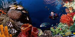 Man scuba diving at Salt River Bay National Historic Park and Ecological Preserve.: Photograph courtesy of NOAA