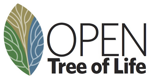 "The ""Open Tree of Life"" is one of three major new scientific projects funded by the NSF.: This initial tree of life, called the Open Tree of Life, will not be static. Scientists will develop tools for researchers to update and revise the tree as new data come in. Photograph courtesy of  NSF National Evolutionary Synthesis Center"